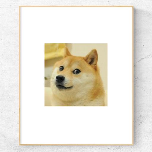 web AR XR+ Doge